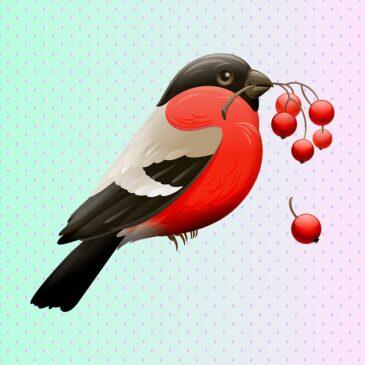 Odkrywcy dokarmiają ptaki