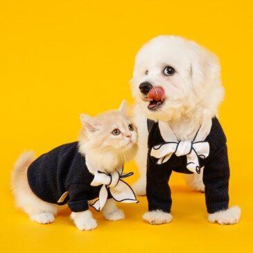Domowi przyjaciele pies i kot :)